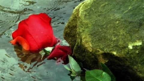 """Poema """"LA ROSA Y LA PIEDRA"""""""