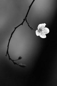 Maldita primavera | Woman·s Soul