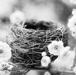 Construir ru propio nido
