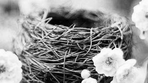 Construir tu propio nido