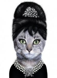 Gato con diamantes